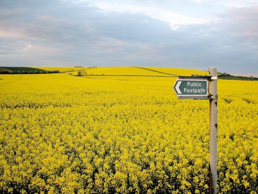 Using Your Farmland to Grown Canola