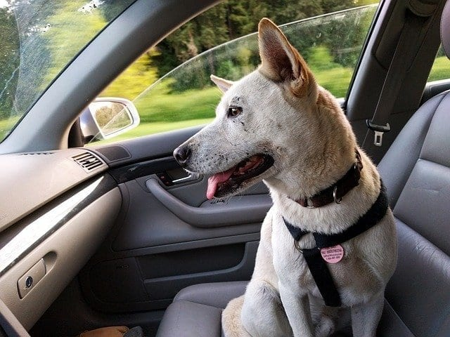 How To Keep Your Car Clean When You Have A Pet