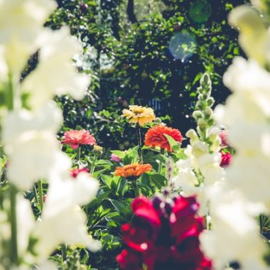 Flower garden - learn how to keep your garden in check