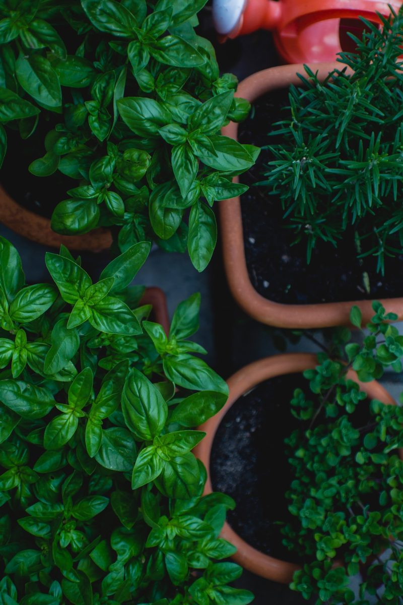 Top view of green leafed herbs in pots