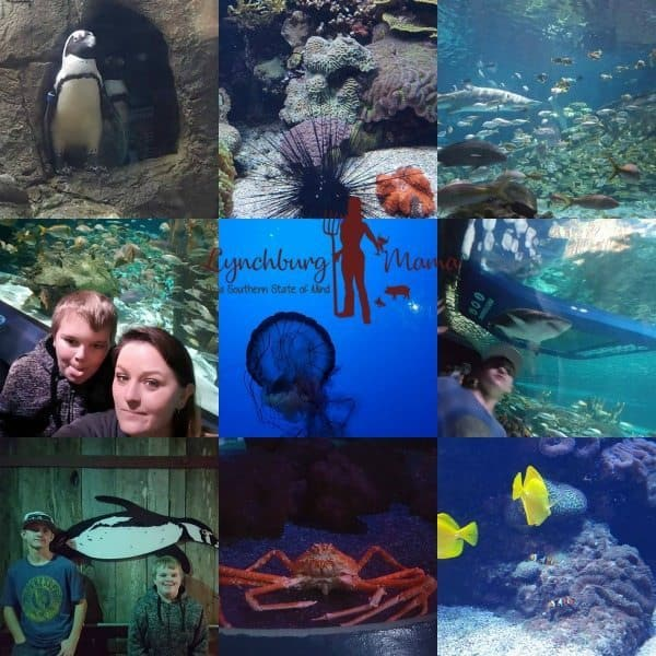 Ripley's Aquarium of the Smokies | Gatlinburg, TN